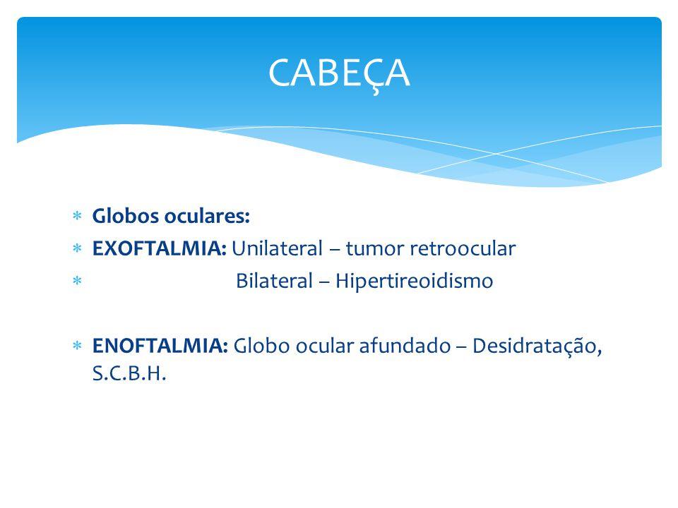 Globos oculares: EXOFTALMIA: Unilateral – tumor retroocular Bilateral – Hipertireoidismo ENOFTALMIA: Globo ocular afundado – Desidratação, S.C.B.H. CA