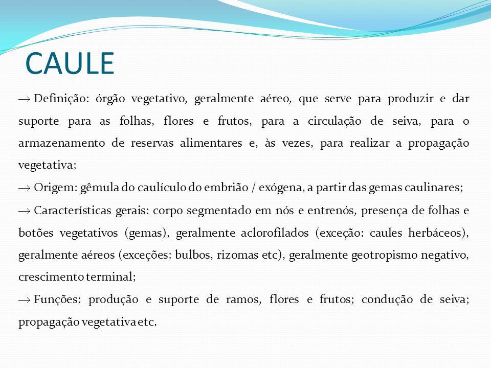 CAULE Definição: órgão vegetativo, geralmente aéreo, que serve para produzir e dar suporte para as folhas, flores e frutos, para a circulação de seiva