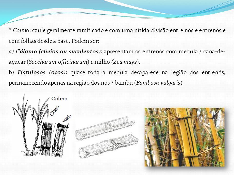 * Colmo: caule geralmente ramificado e com uma nítida divisão entre nós e entrenós e com folhas desde a base. Podem ser: a) Cálamo (cheios ou suculent