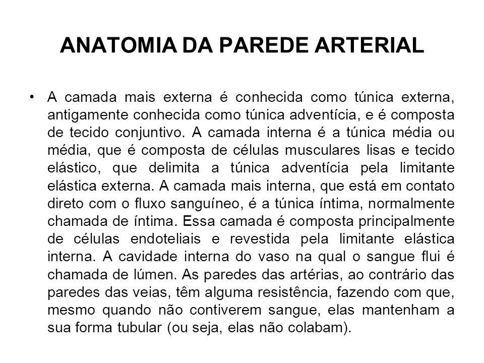 ANATOMIA DA PAREDE ARTERIAL A camada mais externa é conhecida como túnica externa, antigamente conhecida como túnica adventícia, e é composta de tecid