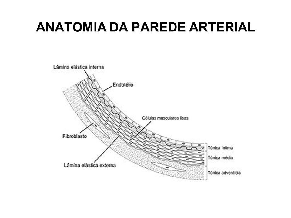 DOMINÂNCIA CORONARIANA Dominância CD : 85% casos - ultrapassa a crux cordis e dá origem a Descendente Posterior (DP) e Ventricular Posterior (VP); Dominância CX : 8% casos - Descendente Posterior e Ventriculares Posteriores originam-se da porção distal de CX.