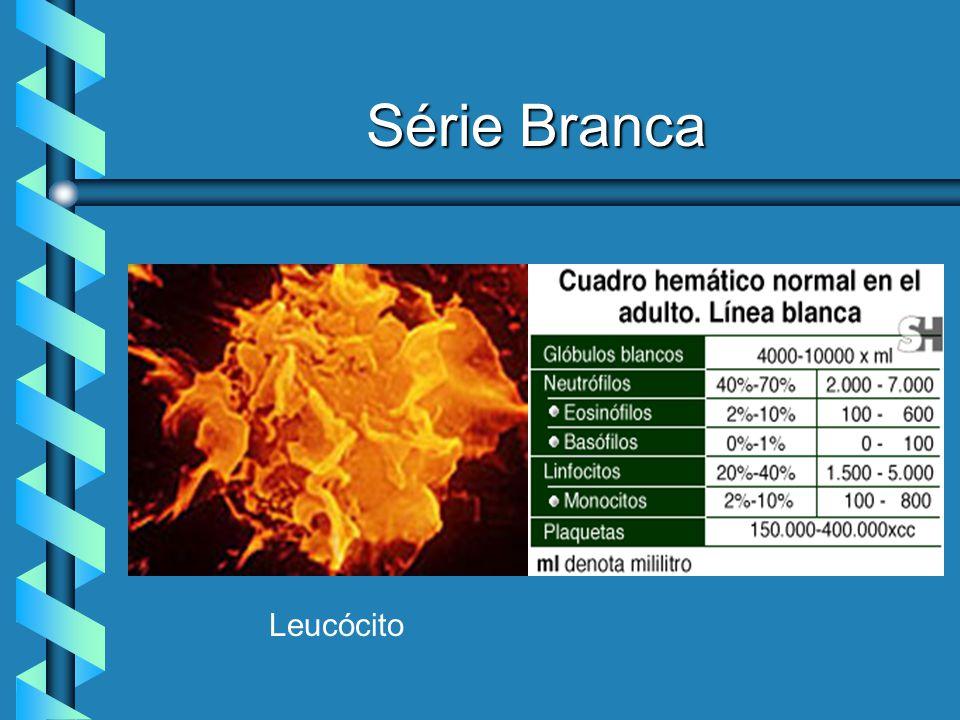 Série Branca ê LEUCOCITOSE ASSOCIADA À CÉLULAS BRANCAS : ê Neutrófilos - Infecções bacterianas, Infarto Agudo, Isquemia, Uremia, Diabetes, Gota, Leucemia mielocítica e Hemorragias ê Eosinófilos - Alergias, Parasitoses, Doenças da Pele e Hemopatias ê Basófilos - Mielofibrose, Dermatites, Colite e Leucemia crônica ê Linfócitos - Infecções agudas, Crônicas ( Tuberculose, Sífilis ) e Mononucleose ( grande número de linfócitos atípicos ).