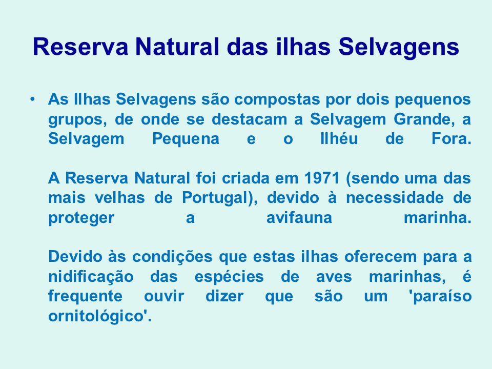 Reserva Natural das ilhas Selvagens As Ilhas Selvagens são compostas por dois pequenos grupos, de onde se destacam a Selvagem Grande, a Selvagem Peque
