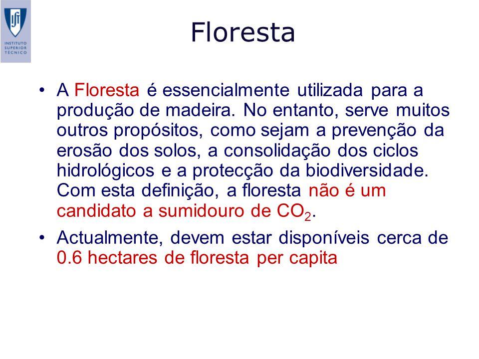 Floresta A Floresta é essencialmente utilizada para a produção de madeira.