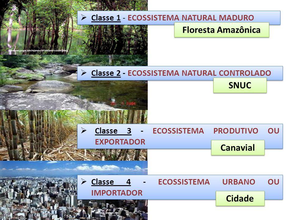 picasaweb.google.com/lh/photo/OfTiGdQe6RYxA1DEQ89ejg ECOSSISTEMA NATURAL MADURO ECOSSISTEMA NATURAL MADURO (Classe 1) ÁREA NATURAL INALTERADA; MANTÉM A SI MESMO; LIMPA A ATMOSFERA (Dilui,absorve e neutraliza contaminantes); ESTRUTURA COMPLEXA; MAIOR BIODIVERSIDADE E BIOMASSA; MAIOR ESTABILIDADE; MAIOR RESISTÊNCIA.