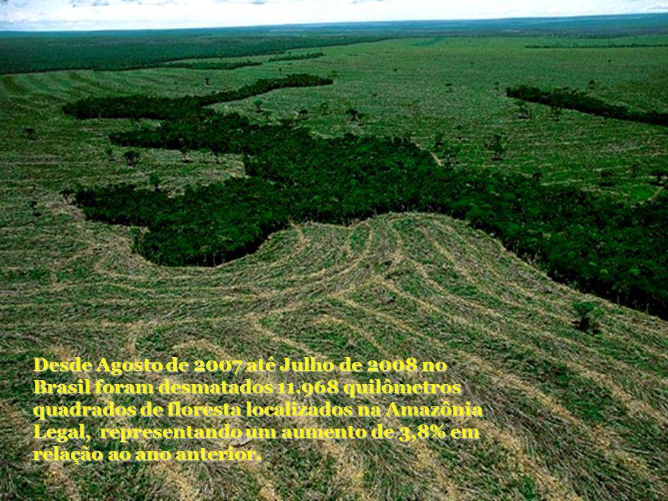 Desde Agosto de 2007 até Julho de 2008 no Brasil foram desmatados 11.968 quilômetros quadrados de floresta localizados na Amazônia Legal, representand