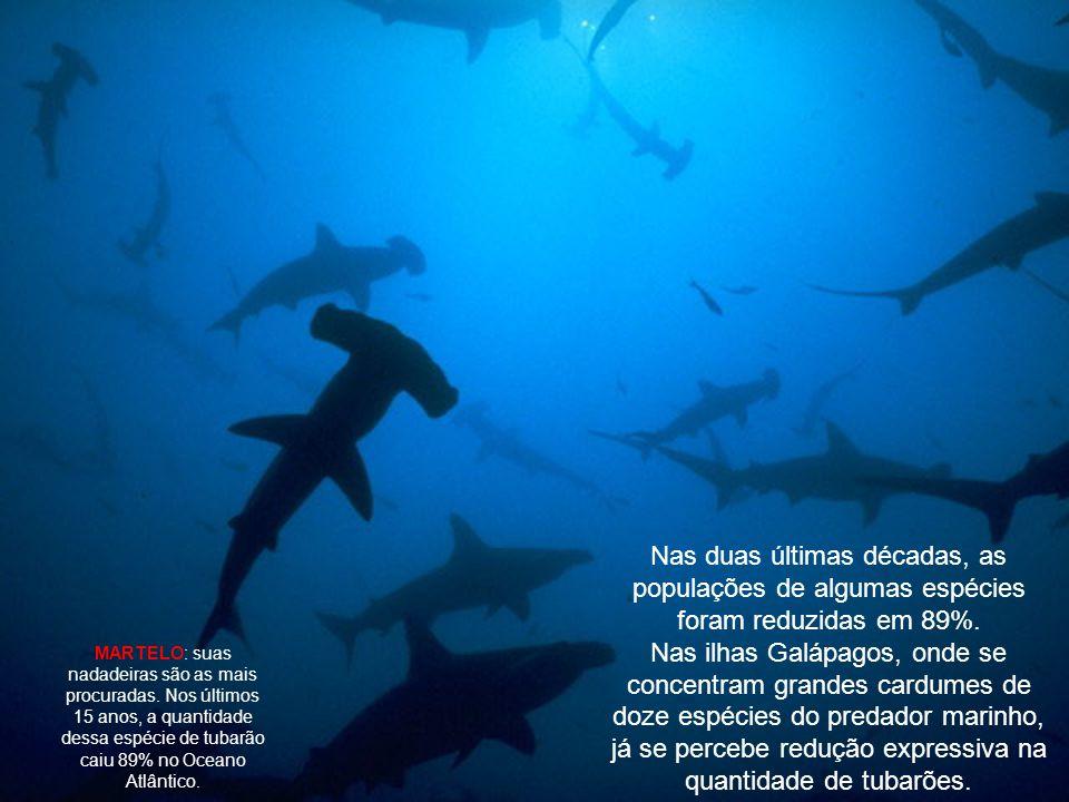 Ainda que a prática não seja permitida dentro da zona de exploração econômica exclusiva desde 1998, o Brasil também dá a sua contribuição ao mercado negro de nadadeiras.