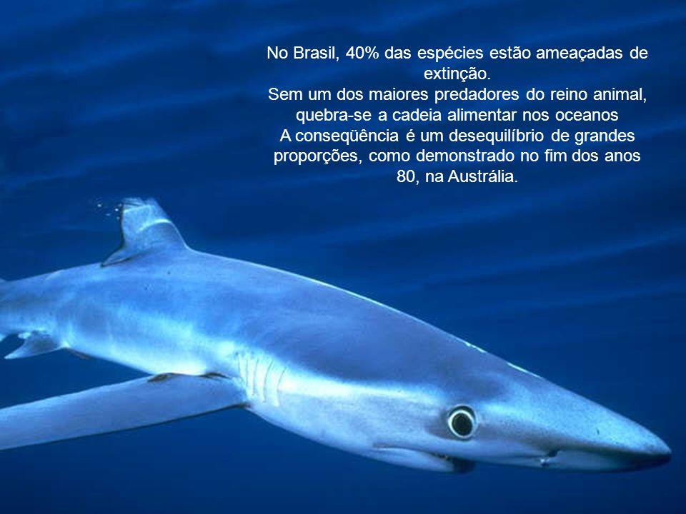 No Brasil, 40% das espécies estão ameaçadas de extinção.
