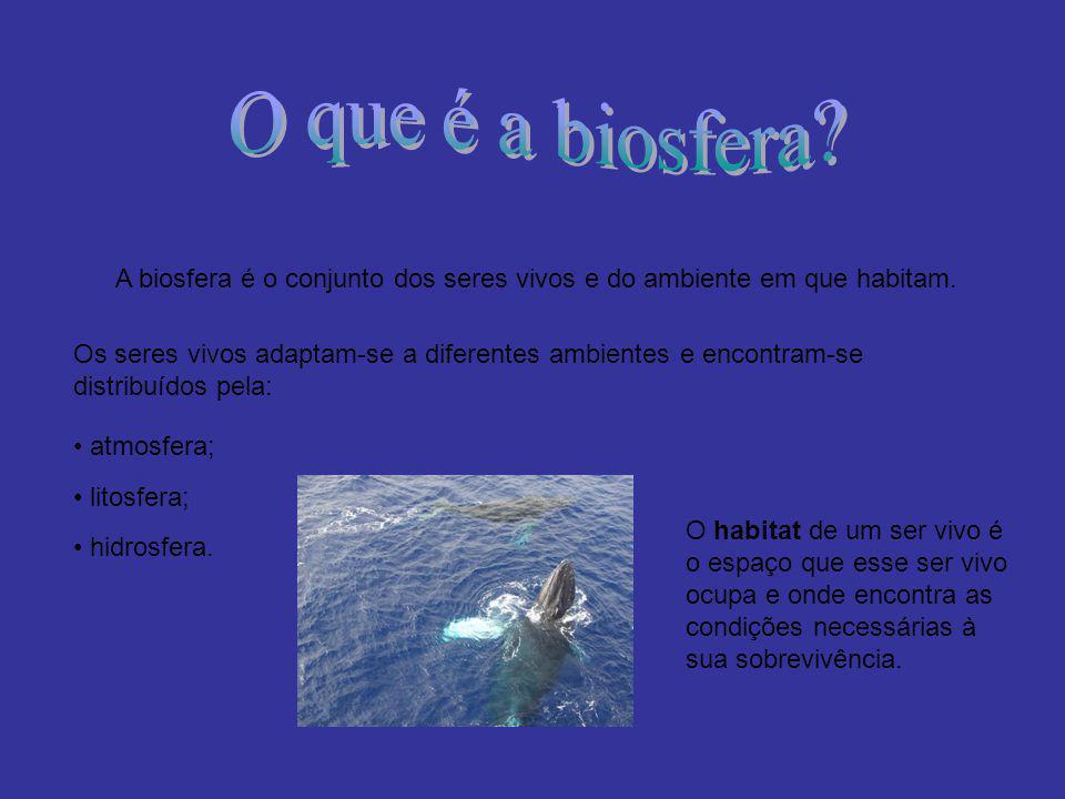 A biosfera é o conjunto dos seres vivos e do ambiente em que habitam. Os seres vivos adaptam-se a diferentes ambientes e encontram-se distribuídos pel