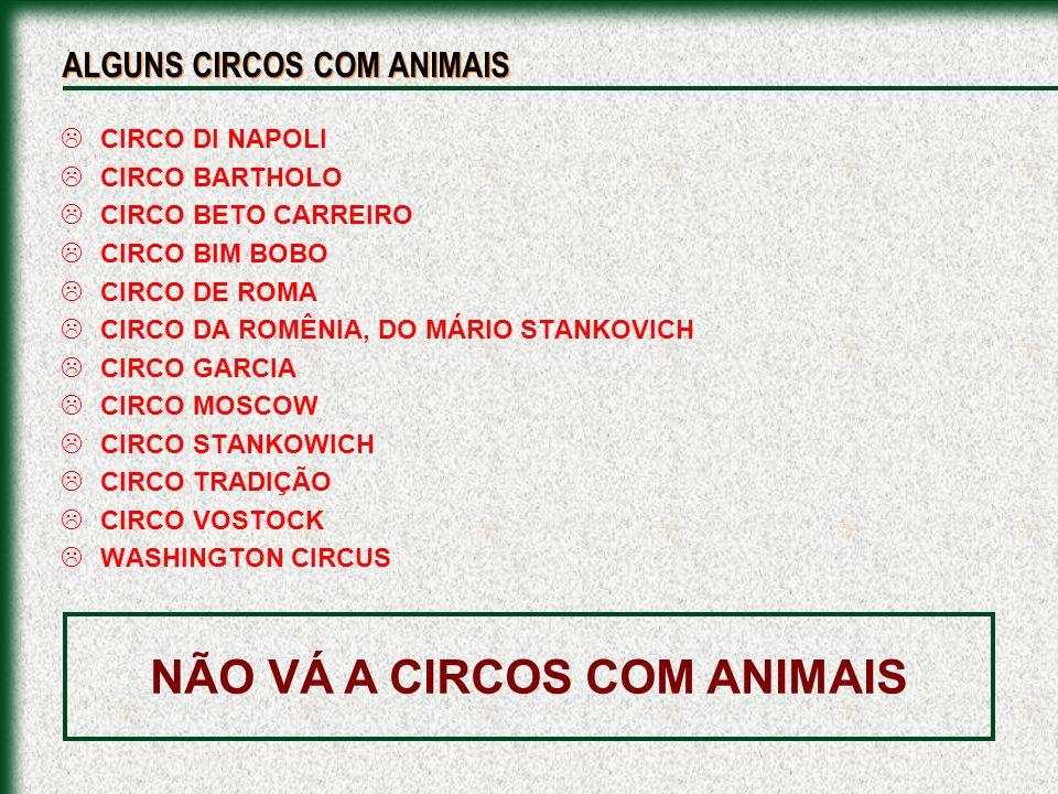 CIRCO DI NAPOLI CIRCO BARTHOLO CIRCO BETO CARREIRO CIRCO BIM BOBO CIRCO DE ROMA CIRCO DA ROMÊNIA, DO MÁRIO STANKOVICH CIRCO GARCIA CIRCO MOSCOW CIRCO
