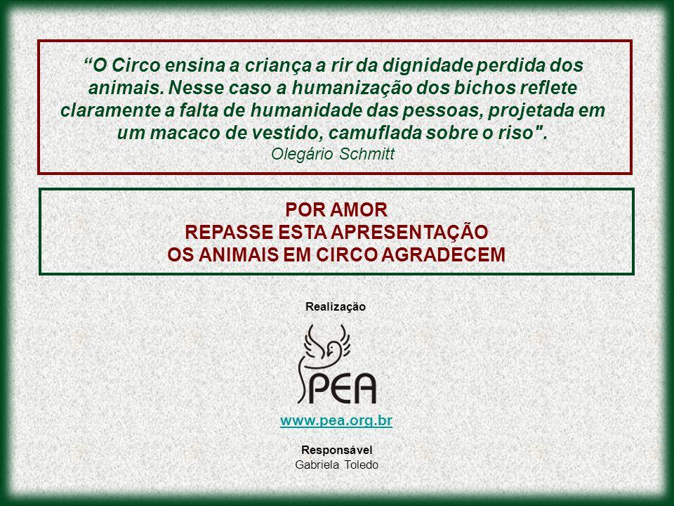 POR AMOR REPASSE ESTA APRESENTAÇÃO OS ANIMAIS EM CIRCO AGRADECEM O Circo ensina a criança a rir da dignidade perdida dos animais. Nesse caso a humaniz
