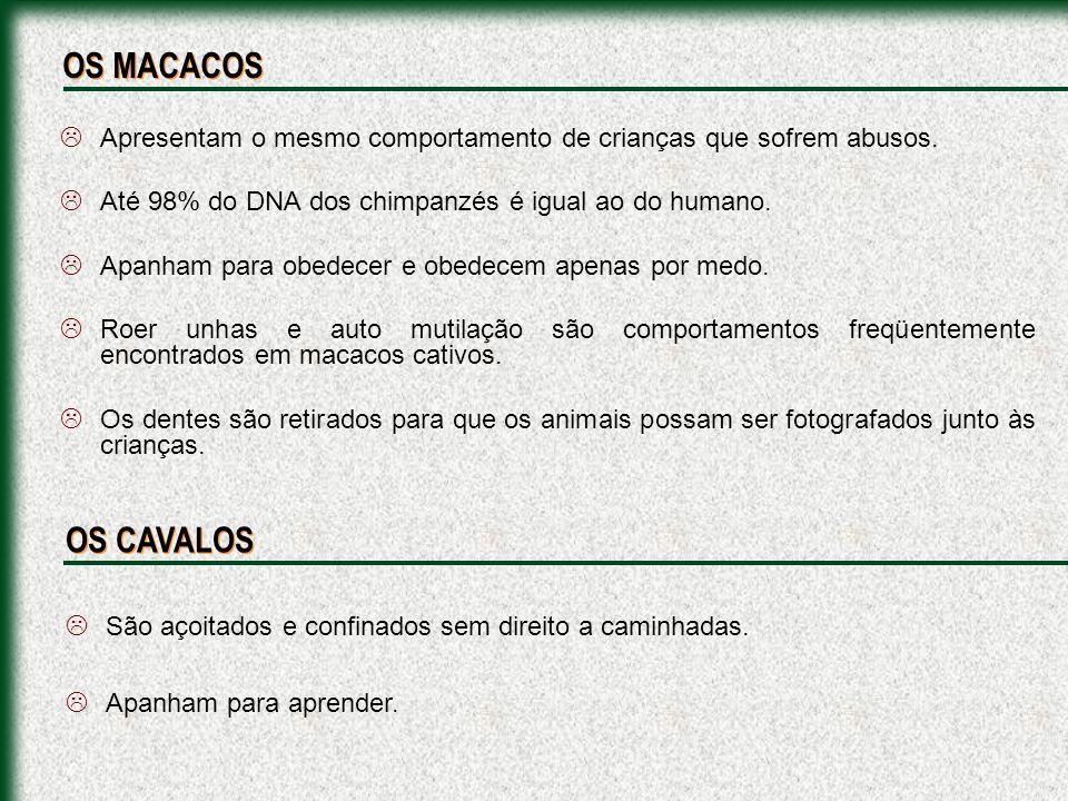 Autópsia dos leões do CIRCO VOSTOK, que mataram um menino em Recife.