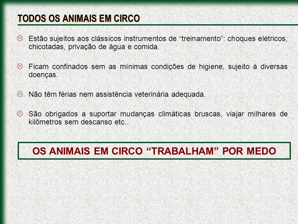 Ponei - CIRCO STANKOWICHPombos e Coelho - CIRCO STANKOWICH Leão abandonado por um circo