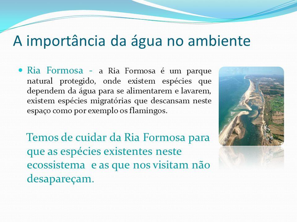 A importância da água no ambiente Ria Formosa - a Ria Formosa é um parque natural protegido, onde existem espécies que dependem da água para se alimen