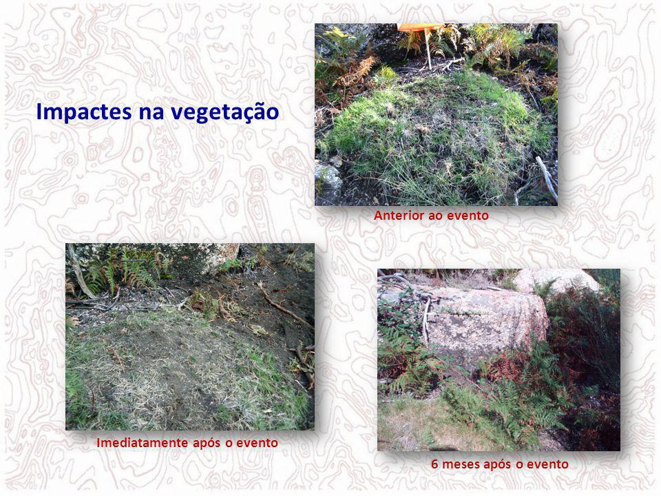 6 meses após o evento Anterior ao evento Imediatamente após o evento Impactes na vegetação