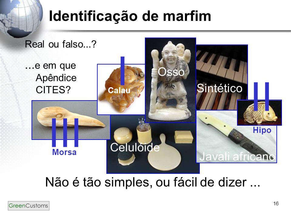 16 Real ou falso...? Não é tão simples, ou fácil de dizer... Identificação de marfim... e em que Apêndice CITES? Osso Celulóide Javali africano Sintét