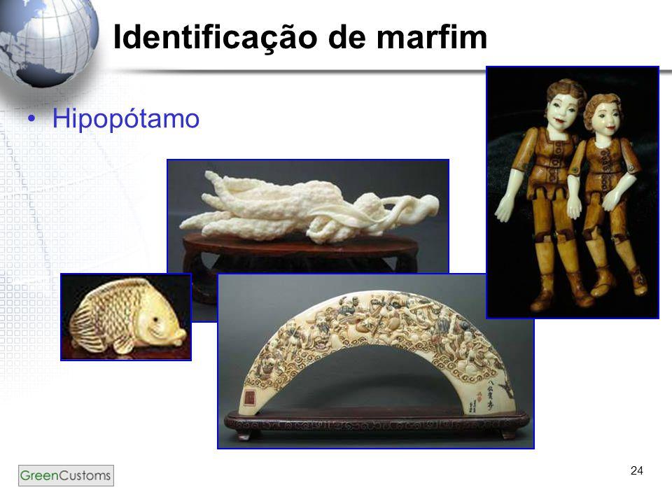 24 Identificação de marfim Hipopótamo