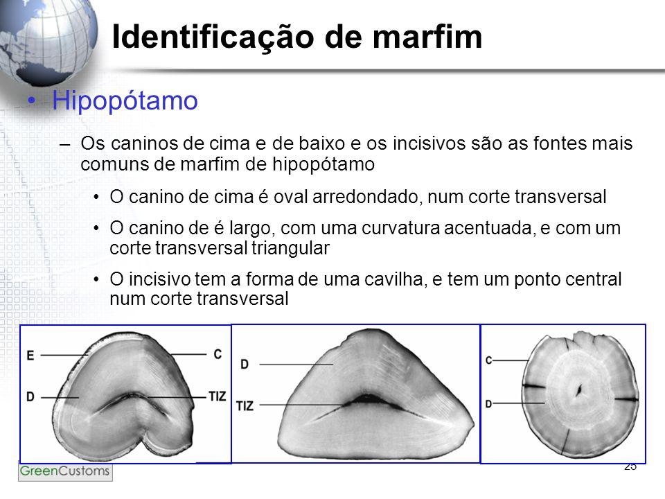 25 Identificação de marfim Hipopótamo –Os caninos de cima e de baixo e os incisivos são as fontes mais comuns de marfim de hipopótamo O canino de cima