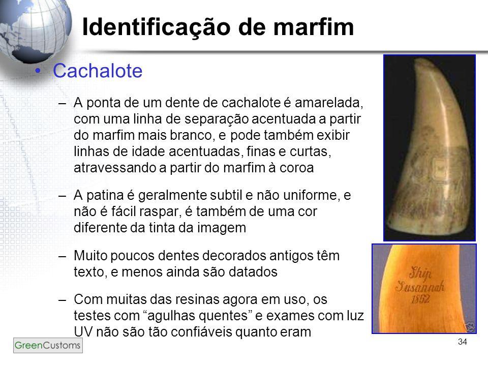 34 Identificação de marfim Cachalote –A ponta de um dente de cachalote é amarelada, com uma linha de separação acentuada a partir do marfim mais branc