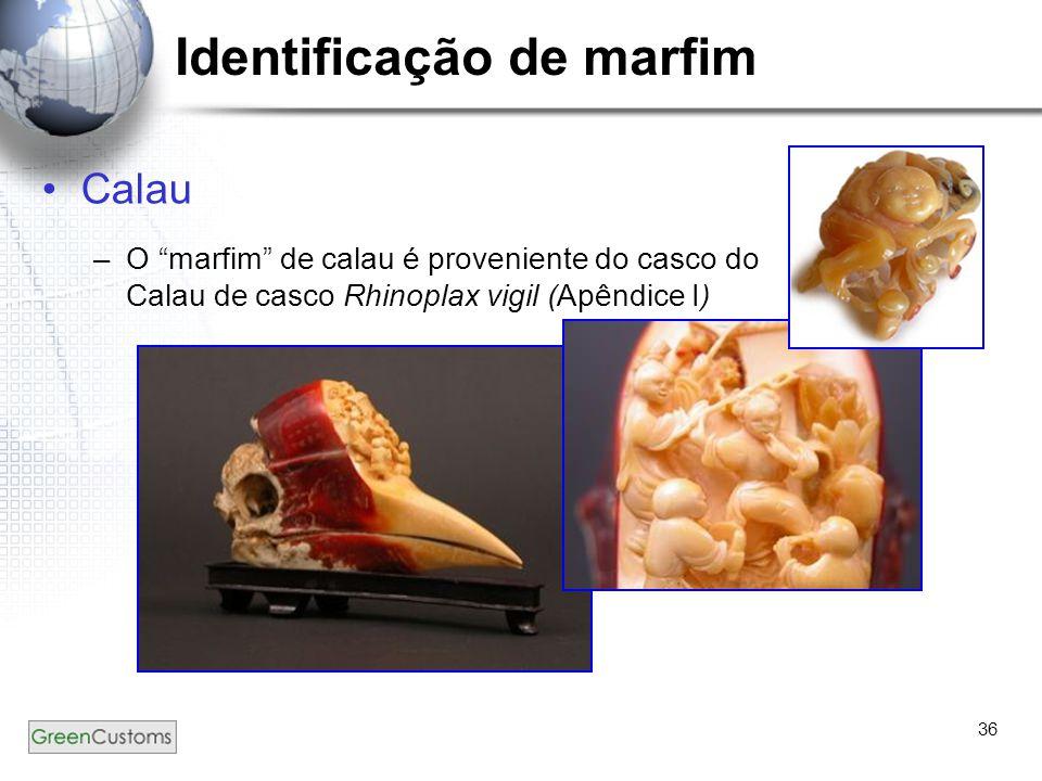 36 Identificação de marfim Calau –O marfim de calau é proveniente do casco do Calau de casco Rhinoplax vigil (Apêndice I)