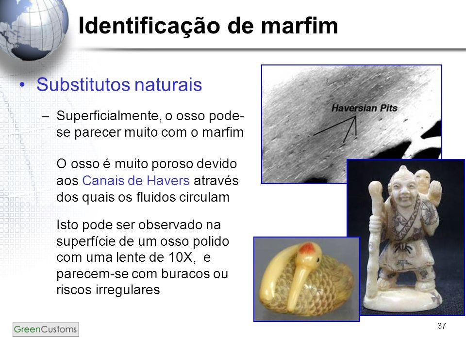 37 Identificação de marfim Substitutos naturais –Superficialmente, o osso pode- se parecer muito com o marfim O osso é muito poroso devido aos Canais