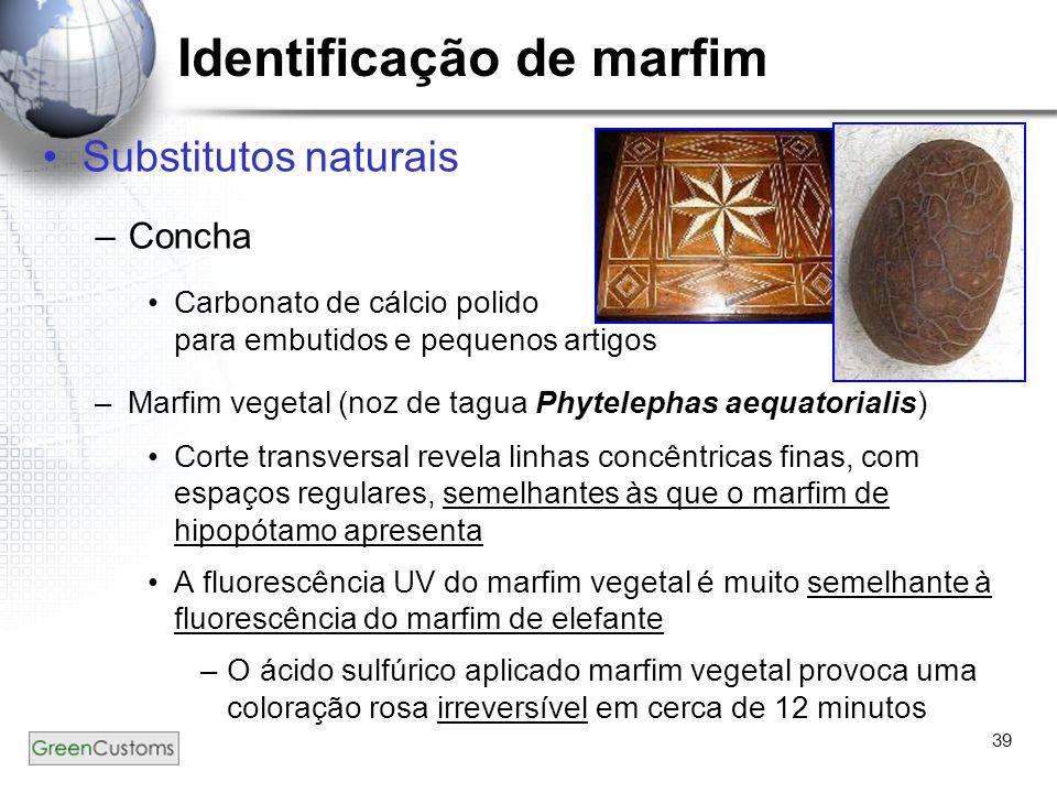 39 Substitutos naturais –Concha Carbonato de cálcio polido para embutidos e pequenos artigos –Marfim vegetal (noz de tagua Phytelephas aequatorialis)
