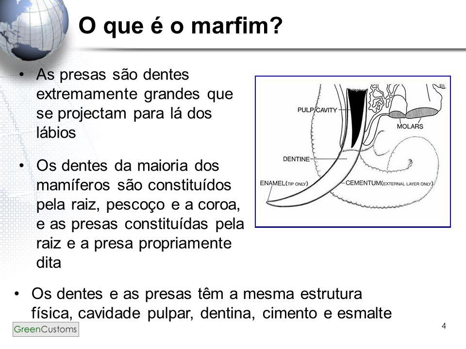 4 O que é o marfim? As presas são dentes extremamente grandes que se projectam para lá dos lábios Os dentes da maioria dos mamíferos são constituídos