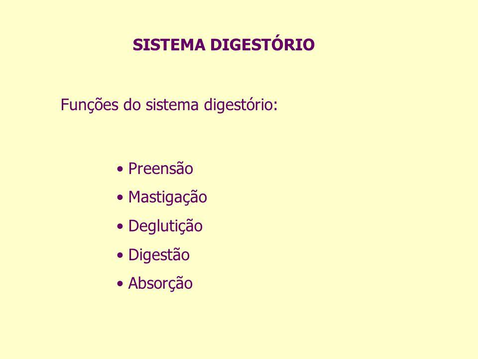 SISTEMA DIGESTÓRIO Funções do sistema digestório: Preensão Mastigação Deglutição Digestão Absorção