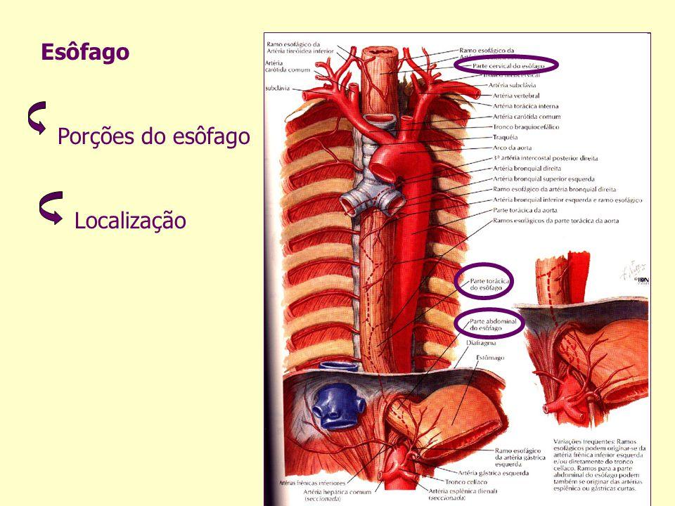 Rim É um órgão par Abdominal Localizado posteriormente ao peritônio parietal O rim humano tem forma de grão de feijão
