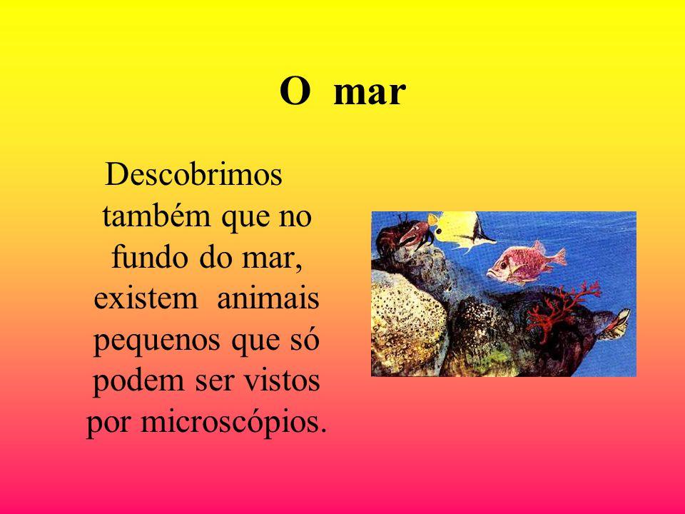 O fundo do mar tem muitos peixes bonitos e coloridos. Mas o fundo do mar é escuro.