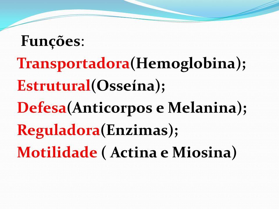 Funções: Transportadora(Hemoglobina); Estrutural(Osseína); Defesa(Anticorpos e Melanina); Reguladora(Enzimas); Motilidade ( Actina e Miosina)