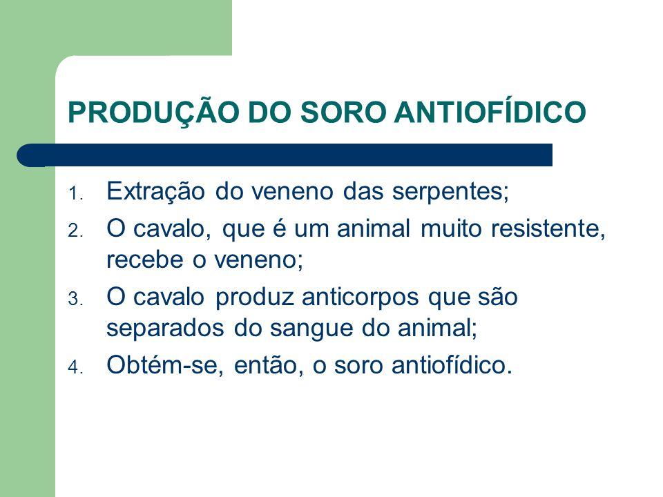 PRODUÇÃO DO SORO ANTIOFÍDICO 1. Extração do veneno das serpentes; 2. O cavalo, que é um animal muito resistente, recebe o veneno; 3. O cavalo produz a