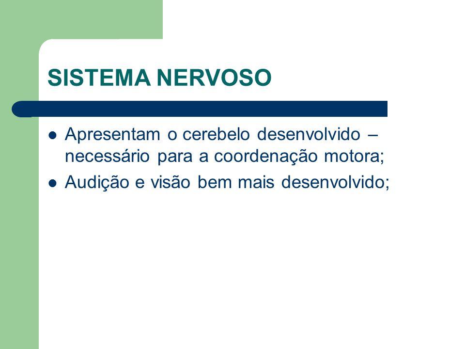 SISTEMA NERVOSO Apresentam o cerebelo desenvolvido – necessário para a coordenação motora; Audição e visão bem mais desenvolvido;