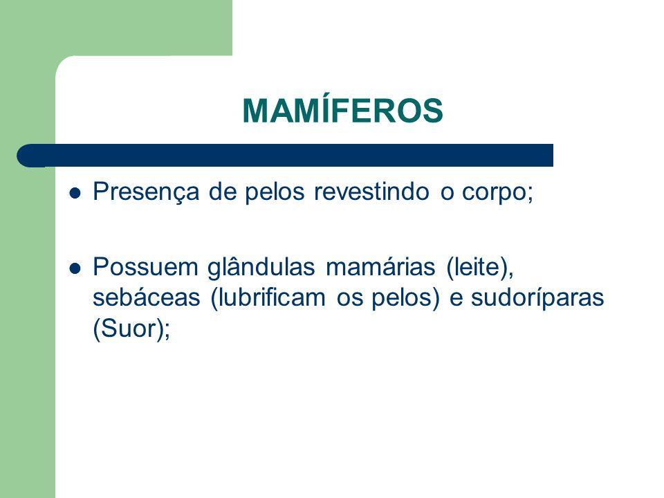 MAMÍFEROS Presença de pelos revestindo o corpo; Possuem glândulas mamárias (leite), sebáceas (lubrificam os pelos) e sudoríparas (Suor);