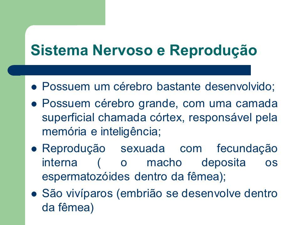 Sistema Nervoso e Reprodução Possuem um cérebro bastante desenvolvido; Possuem cérebro grande, com uma camada superficial chamada córtex, responsável