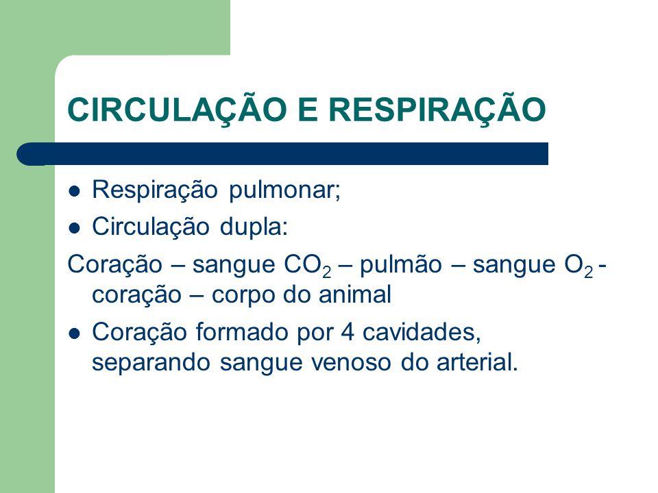 CIRCULAÇÃO E RESPIRAÇÃO Respiração pulmonar; Circulação dupla: Coração – sangue CO 2 – pulmão – sangue O 2 - coração – corpo do animal Coração formado
