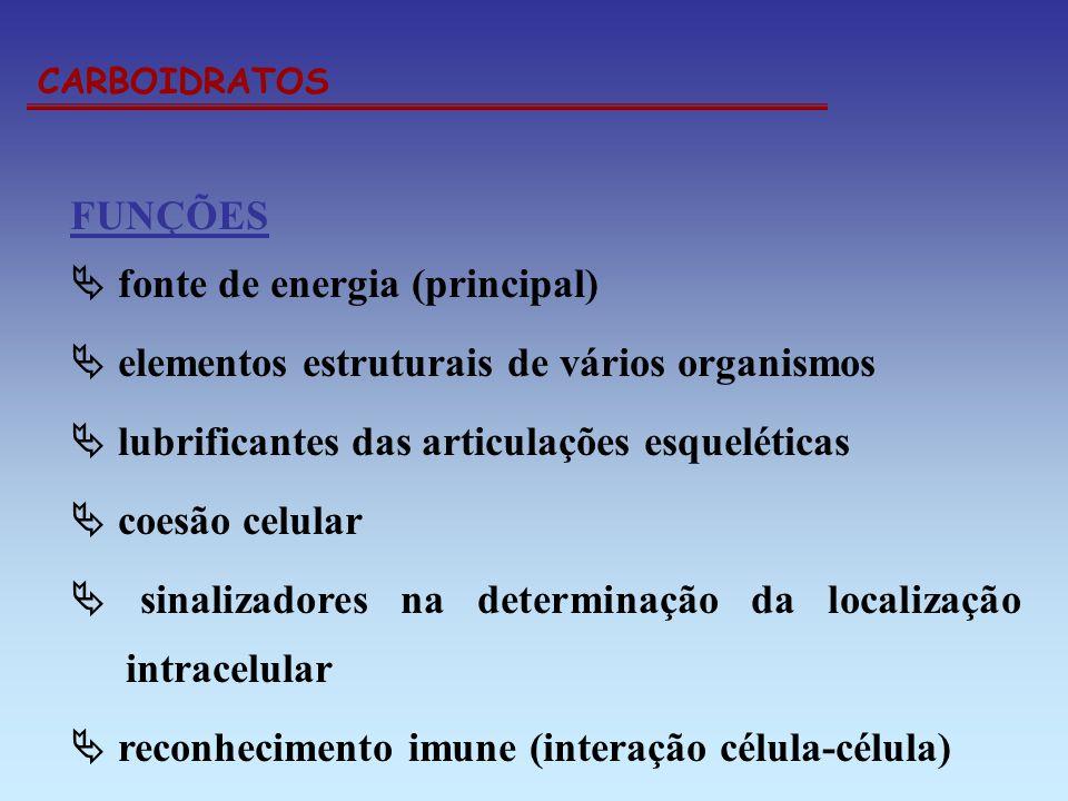 CARBOIDRATOS FUNÇÕES fonte de energia (principal) elementos estruturais de vários organismos lubrificantes das articulações esqueléticas coesão celula