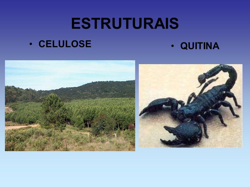 ESTRUTURAIS CELULOSE QUITINA