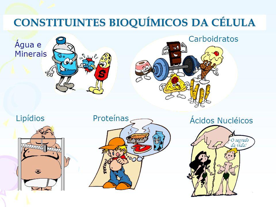 ÁGUA Compostos Inorgânicos A água e suas funções: Compõe 70% da massa corporal Atua como solvente universal Regulador de temperatura Anidrobiose: seres que vivem sem água.Ex:sementes de vegetais superiores, esporos de bactérias.
