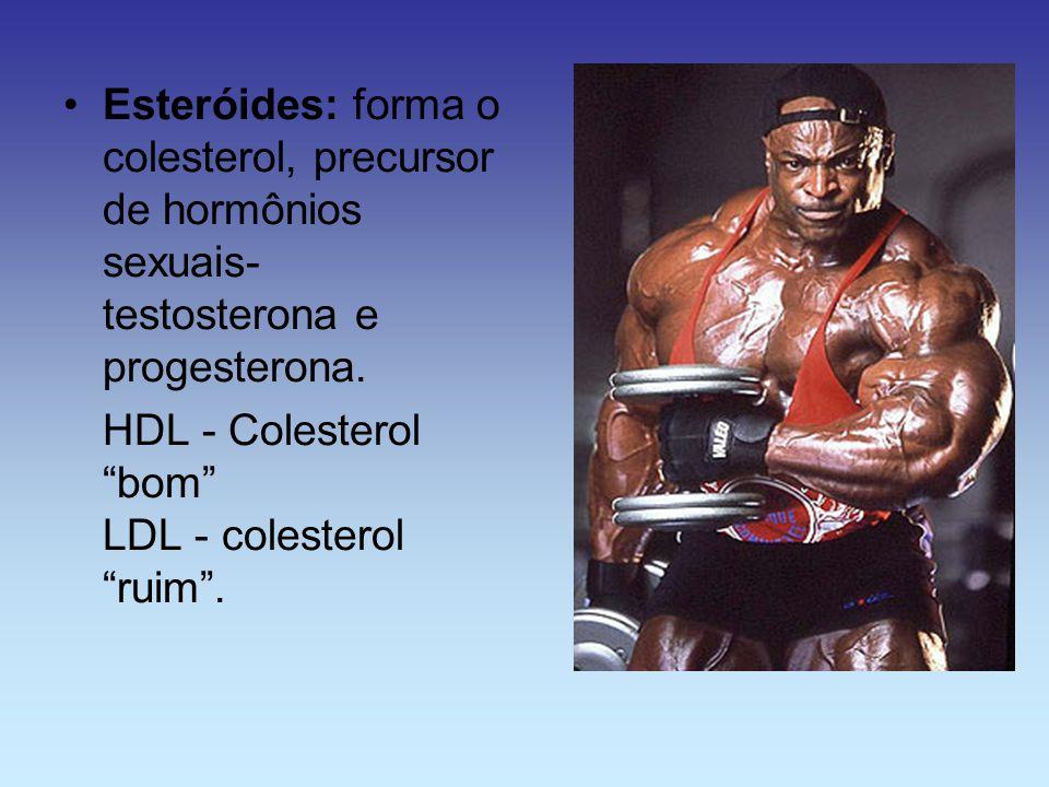 Esteróides: forma o colesterol, precursor de hormônios sexuais- testosterona e progesterona. HDL - Colesterol bom LDL - colesterol ruim.