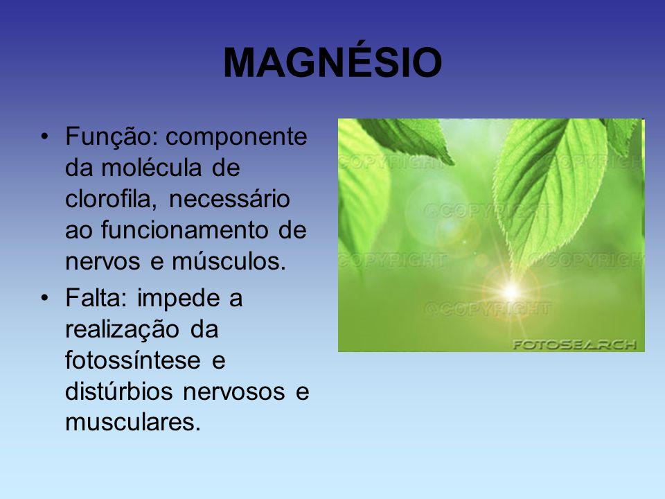 MAGNÉSIO Função: componente da molécula de clorofila, necessário ao funcionamento de nervos e músculos. Falta: impede a realização da fotossíntese e d