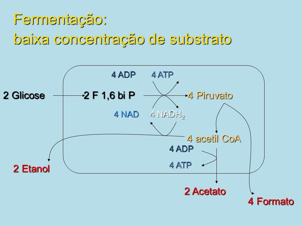 2 Glicose 2 F 1,6 bi P 4 Piruvato 2 Etanol 4 ADP 4 ATP 4 NAD 4 NADH 2 4 acetil CoA 2 Acetato 4 Formato 4 ADP 4 ATP Fermentação: baixa concentração de