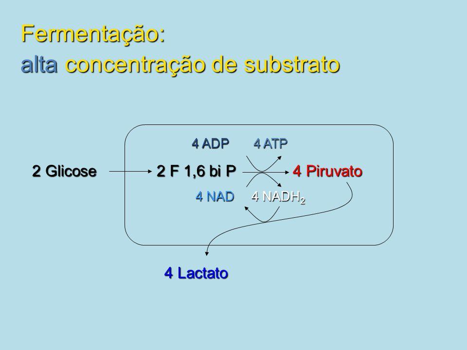 2 Glicose 2 F 1,6 bi P 4 Piruvato 4 Lactato 4 ADP 4 ATP 4 NAD 4 NADH 2 Fermentação: alta concentração de substrato