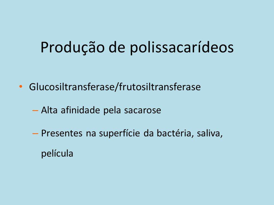 Produção de polissacarídeos Glucosiltransferase/frutosiltransferase – Alta afinidade pela sacarose – Presentes na superfície da bactéria, saliva, pelí