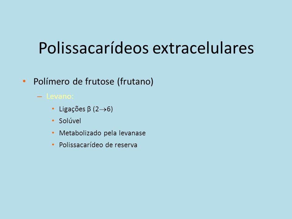 Polissacarídeos extracelulares Polímero de frutose (frutano) – Levano: Ligações β (2 6) Solúvel Metabolizado pela levanase Polissacarídeo de reserva