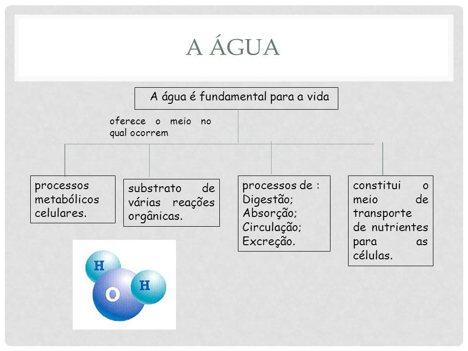 A ÁGUA A água é fundamental para a vida oferece o meio no qual ocorrem processos metabólicos celulares.
