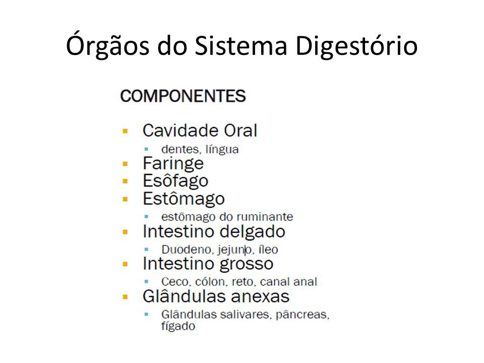 Células principais