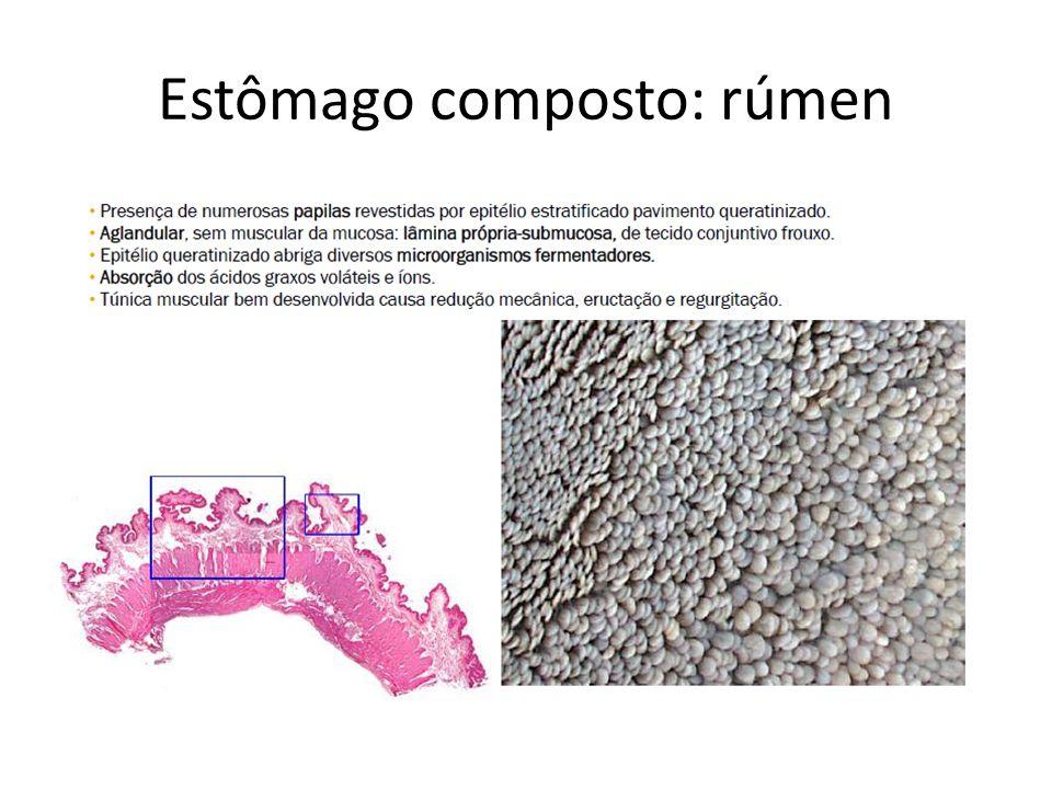 Estômago composto: rúmen