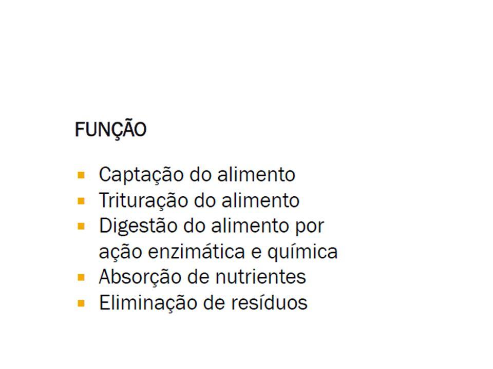 Células enteroendócrinas