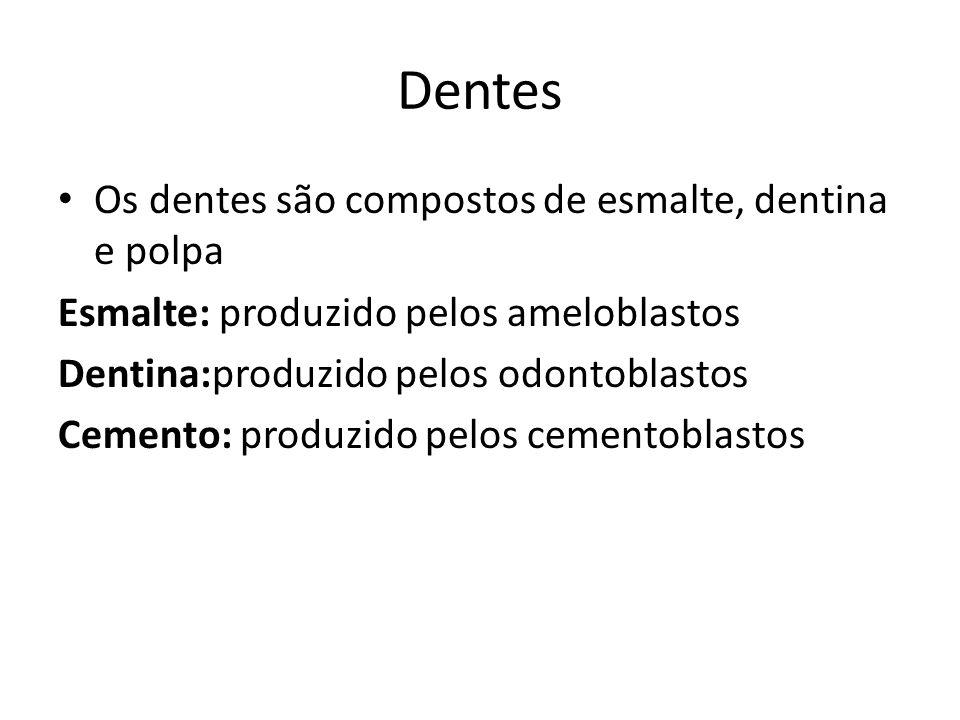 Dentes Os dentes são compostos de esmalte, dentina e polpa Esmalte: produzido pelos ameloblastos Dentina:produzido pelos odontoblastos Cemento: produz